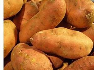 Patate Douce Plante : on dit 5 fois oui la patate douce ~ Dode.kayakingforconservation.com Idées de Décoration