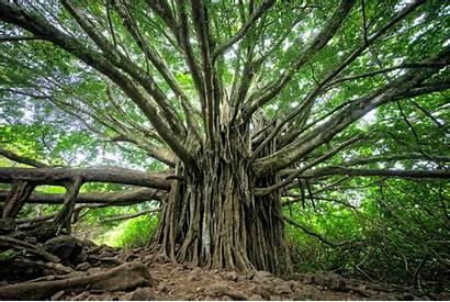 Jungle Tree Trees Leaves Wallpapers
