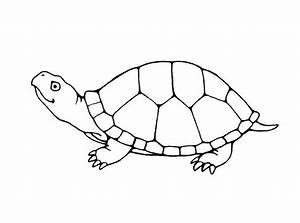 Cute Turtle Coloring Pages - AZ Coloring Pages