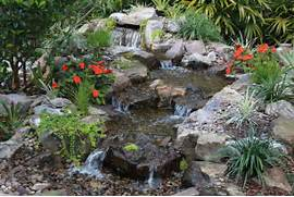 Water Garden Tropical Water Gardens Tropical Water Gardens