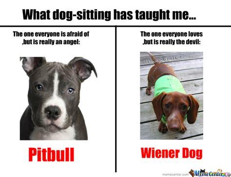 Pitbull Puppy Meme - pitbulls and wiener dogs by nyandeerxd meme center