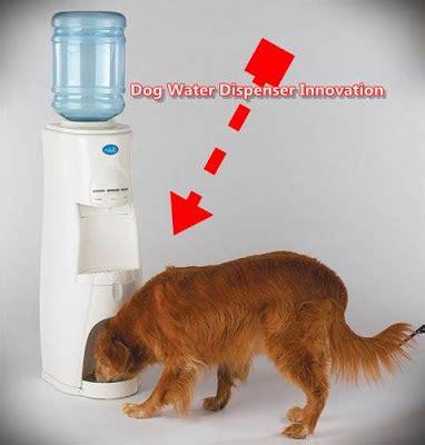 innovations dog water dispenser water cooler