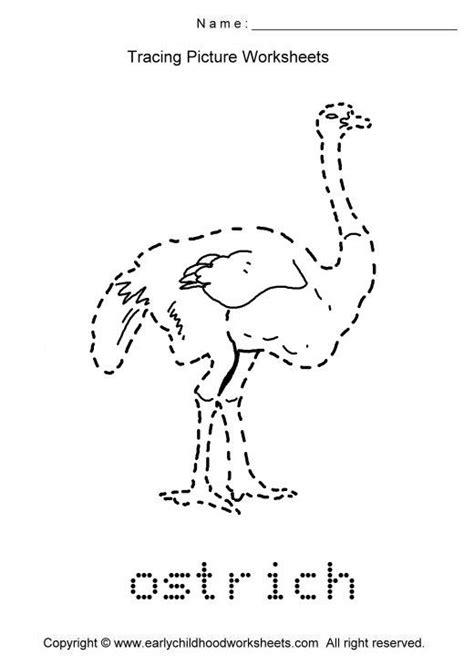 tracing ostrich picture preschool activities summer