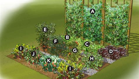 summer vegetable garden plan
