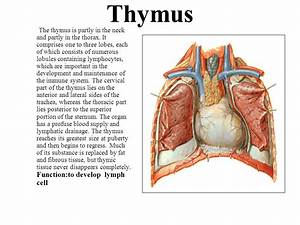 the lymphatic system consists of The lymph conducting ...