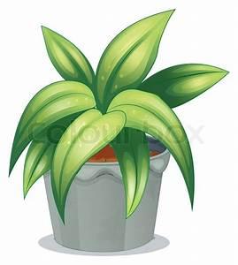 Pflanze Mit Fleischigen Blättern : eine pflanze mit l nglichen bl ttern vektorgrafik colourbox ~ Buech-reservation.com Haus und Dekorationen