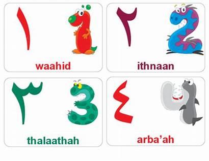 Arabic Numbers Flashcards Flash Alphabet Arabe Kidspressmagazine