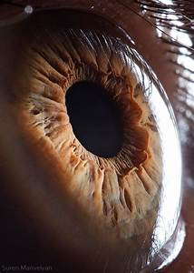Amazingly Revealing Macro Photos of the Human Eye