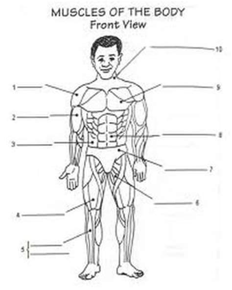 Worksheet  Homeschool The Human Body  Pinterest  Image Search, Yahoo Search And Drawings