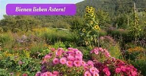 Schnittgut Alles Aus Dem Garten : bienen lieben astern ~ Buech-reservation.com Haus und Dekorationen
