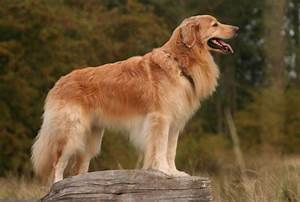 2231 different types of dogs pictures