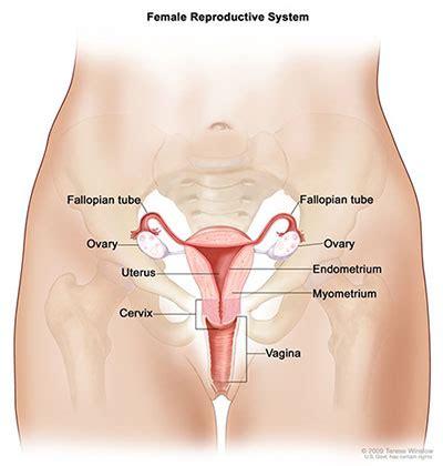 Salpingo-Ovarian & Peritoneal Functional Anatomy | SEER ...