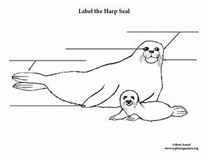 Seal  Harp  Labeling Page