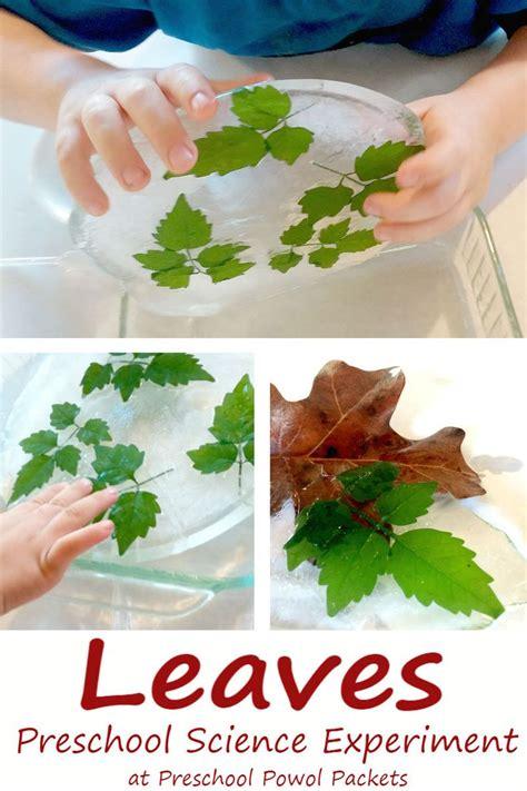 preschool leaf science experiment preschool science 109 | b47981cc978fd07938e904baad6dec4f
