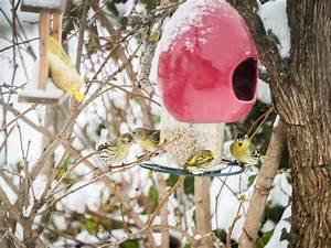 Kleine Vögel Im Garten : was sind denn das f r v gel gerald h reisner bloggt ~ Lizthompson.info Haus und Dekorationen