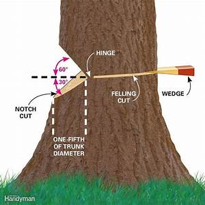 Cut Down A Tree Safely And Other Tree Cutting Tips