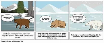 Polar Bears Evolution Storyboard Slide