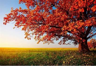 Autumn Desktop Backgrounds Wallpapers Leaves Pixelstalk