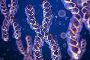 The Secrets Of The X Chromosome