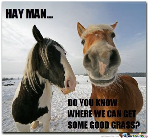 Gay Horse Meme - horse meme hay www pixshark com images galleries with a bite