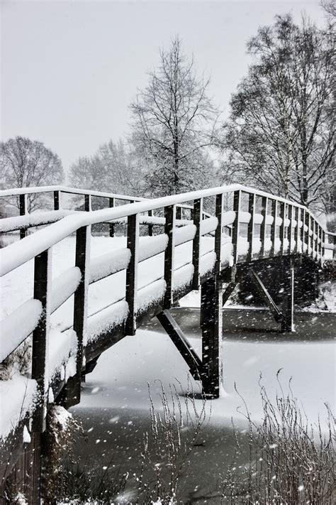 images gratuites la nature neige hiver noir  blanc