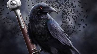 Raven 4k Rabe Corvo Gray Sword Piranti