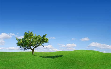 Great Landscape Tree Wallpapers Hd / Desktop And Mobile