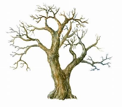Tree Trunk Watercolor Illustrations Vector Clip Illustration