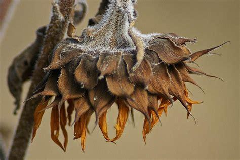 sunflower seed   birdseed  spoiled