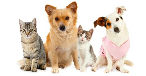 Cat And Dog Top 10 Most Popular Dog And Cat Names Of 2014 Dogtime