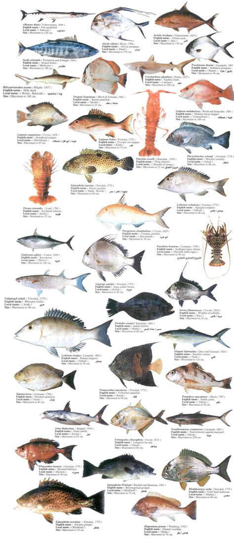 list  types  seafood list  sea animals