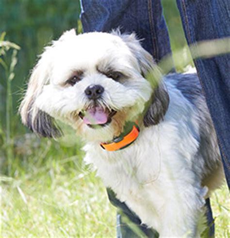 dogwatch  nashville hidden dog fences