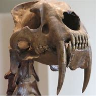 Best Tiger Skull Ideas And Images On Bing Find What Youll Love
