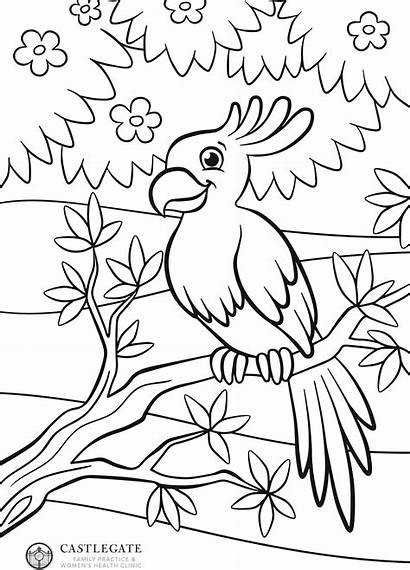 Parrot Drawing Coloring Pages Birds Colouring Corner
