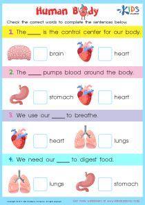 internal organs worksheet printable   kids human