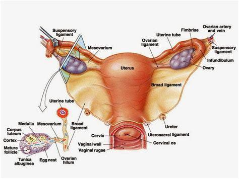 menjaga kebersihan  kesehatan alat reproduksi