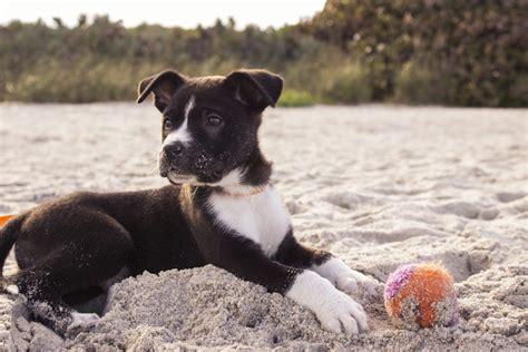 puppy  zoomies  coping mechanisms  frap