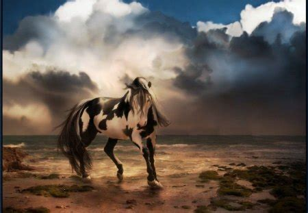 beautiful paint horses animals background wallpapers