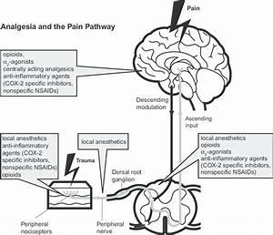 Analgesia And The Pain Pathway  Copyright  U00a9 2012  John