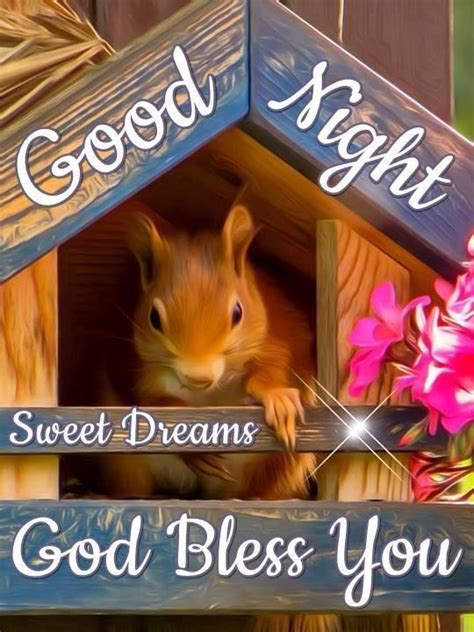 squirrel good night blessing pictures   images