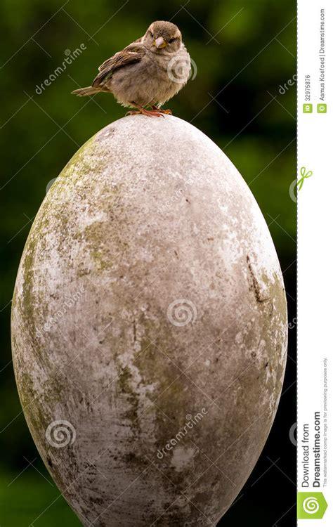 small bird big egg stock photo image  cute accomplishment