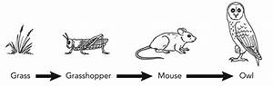 Long Simple Food Chain Diagram