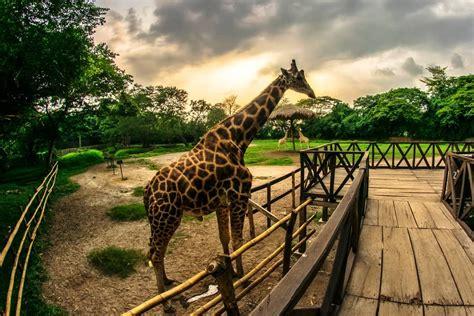 auto safari chapin en escuintla imperio chapin