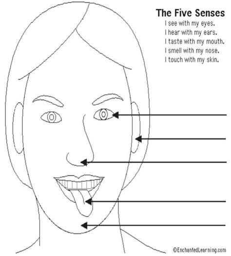 five sense worksheet new 989 five sense organs worksheets