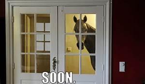 Image Gallery soon horse