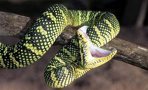 Learn about Snakes | Snake Information | Reptile Gardens ...