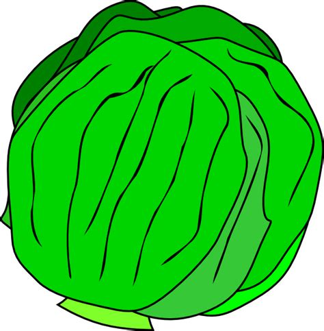 Lettuce Clipart Whole Lettuce Clip At Clker Vector Clip
