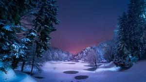 Snowy Winter Forest At Night Wallpaper | Wallpaper Studio ...