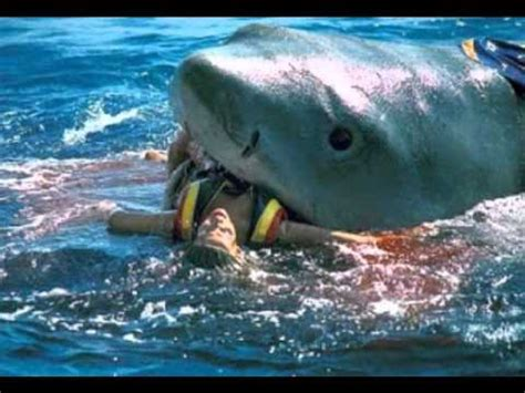 French Fishing Boat Attack by Shark Attack Caught On Tape Graphic Content Youtube