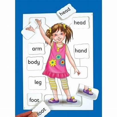 Parts Clipart Teaching Eyfs Bodies Ks1 Cliparts